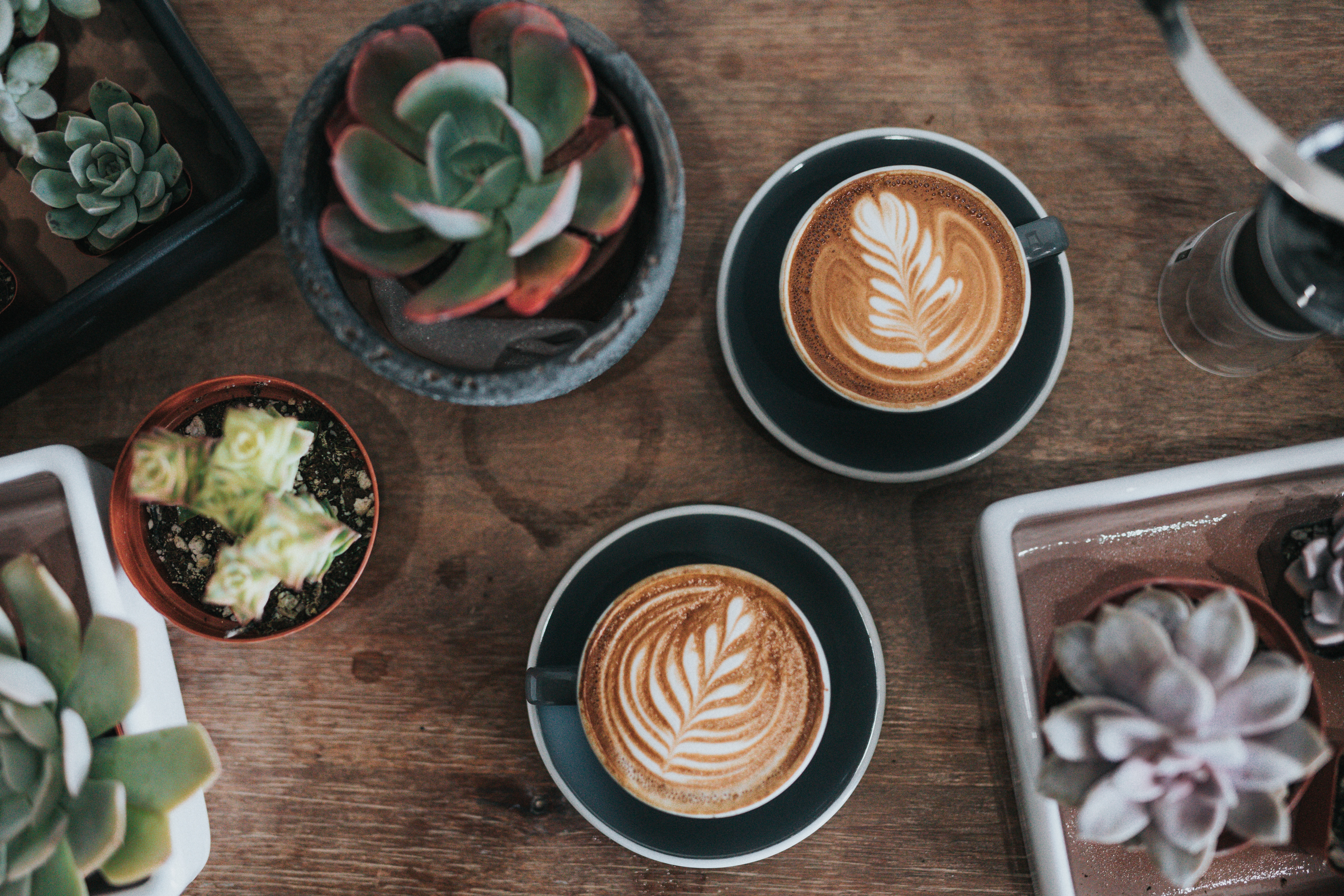 image: coffee and cacti on wooden table