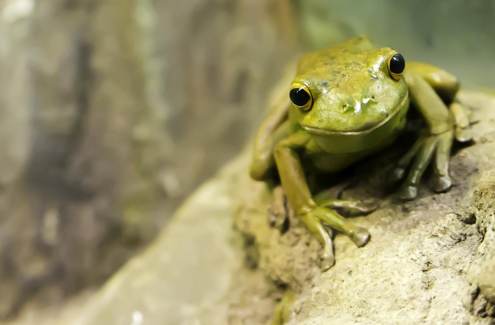 image: cute green frog sitting on a log